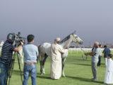 Qatar Equestrian Club#2, Doha, Qatar, 2014